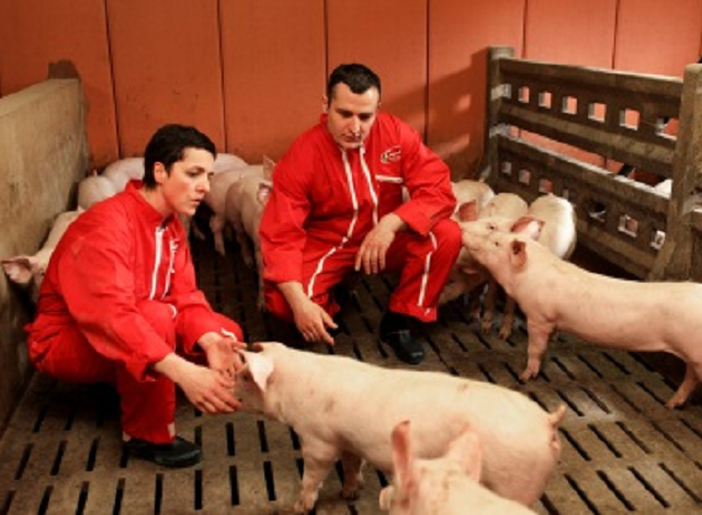 Cooperl, pig breeders. Photo credit : Cooperl