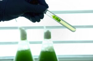 Cyane, the Tam brand for innovating product algae. Photo credit : Tam